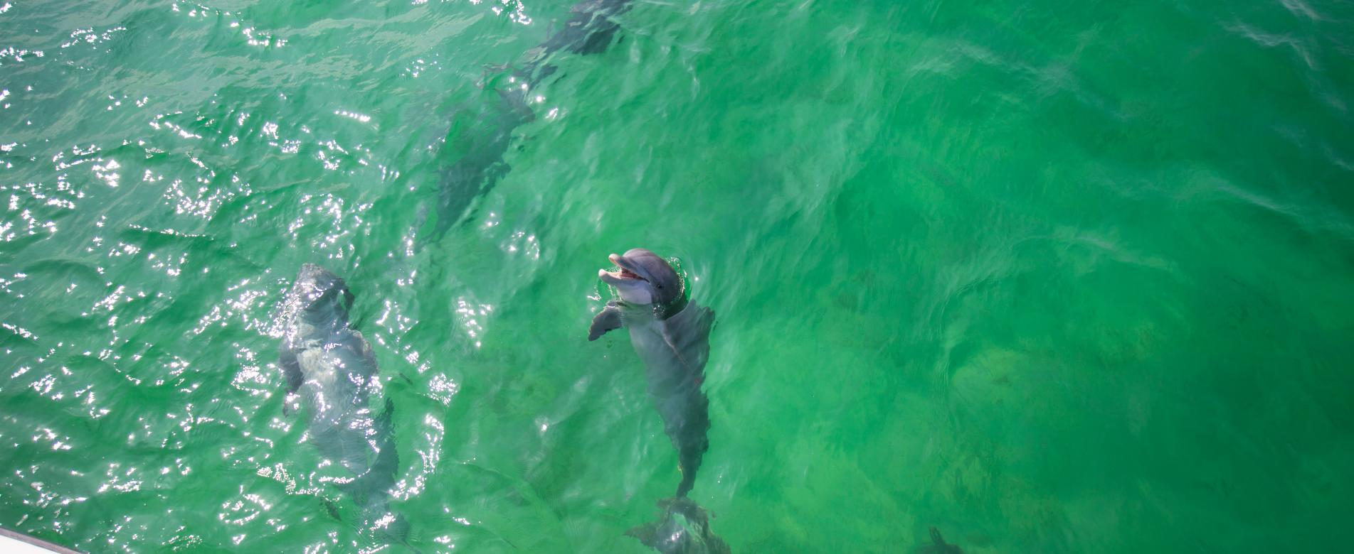 4 Best Dolphin Cruises in Destin, Florida
