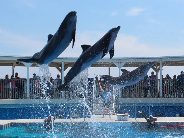Dolphin cruises and tours